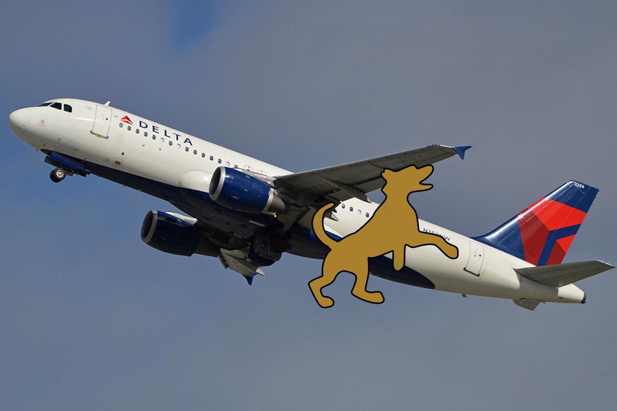 Barking Dog Airbus